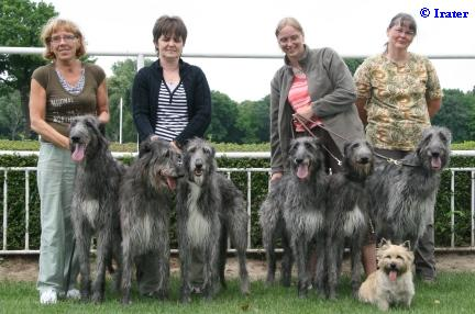 deerhound´s girls understood us that they went to run not to show